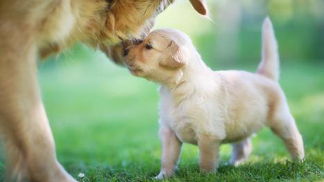Pourquoi les chiens remuent-ils la queue ? | Oui, pourquoi ? | Scoop.it