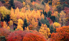 Capture the ephemeral spectacle of autumn colours | 100 Acre Wood | Scoop.it