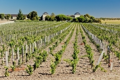 En Primeur, Day Five: The 2013 Wine of the Vintage (by Wine Enthusiast) | Vitabella Wine Daily Gossip | Scoop.it