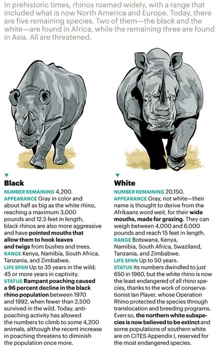 Is this the End of the Wild Rhino? - Condé Nast Traveler   Conde Nast   Scoop.it