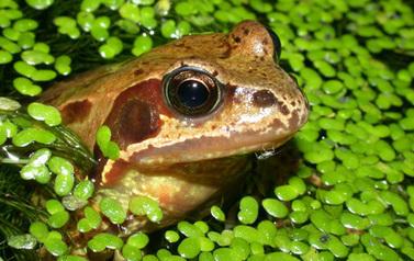 Loi Biodiversité | Développement durable, généralité et curiosité | Scoop.it