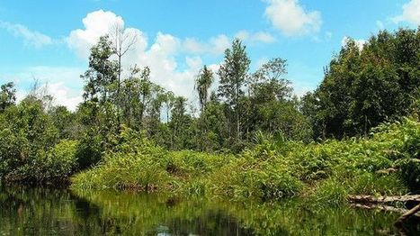 What Indonesia Doesn't Know About Peatlands Could Undermine its Climate Goals | World Resources Institute | Farming, Forests, Water, Fishing and Environment | Scoop.it