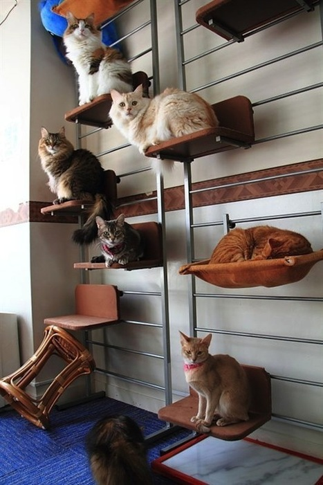 How to organize and store your cats: An impractical guide - ROCKETNEWS24 | Travel to Japan | Scoop.it