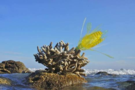 Aligna Sadakhom: Coral flower | Art Installations, Sculpture, Contemporary Art | Scoop.it