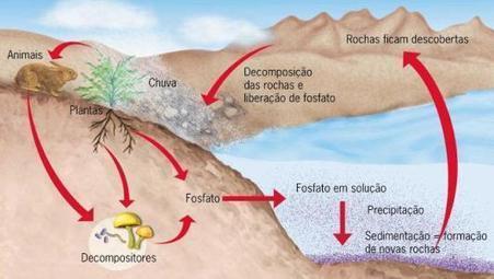Ciclos Biogeoquímicos - Cola da Web | Biologia Primeiro Ano do Ensino Medio | Scoop.it