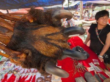 Myanmar's Illegal Wildlife Supermarket - Asia Sentinel   Endangered Species News   Scoop.it