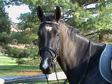 20 Ways Horse Riding Becomes Life Itself | GHPhorses | Scoop.it