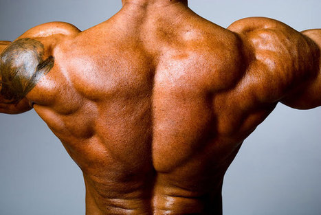 5 Killer Exercises to Build a Massive Back for Beginners - Muscle Fitness Gains | Muscle Fitness Gains | Scoop.it