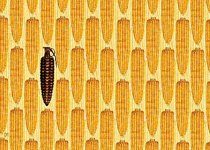 OGM, En Europe, le mépris est de mise - LeTemps.ch | | Abeilles, intoxications et informations | Scoop.it