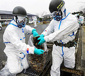 """As Fukushima Cleanup Begins, Long-term Impacts are Weighed 