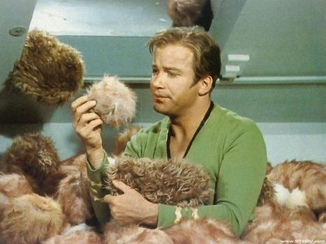 5 Lessons Captain Kirk Can Teach Us About Animal Activism | Activism | Scoop.it