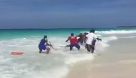 Shark Dragged From Water Dies As Lifeguards Take Selfies | Nature Animals humankind | Scoop.it