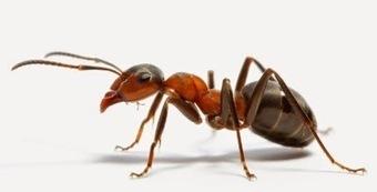 Guaranteed Termite Control in Brisbane at Your Convenience   Termite Tech Pty Ltd   Scoop.it