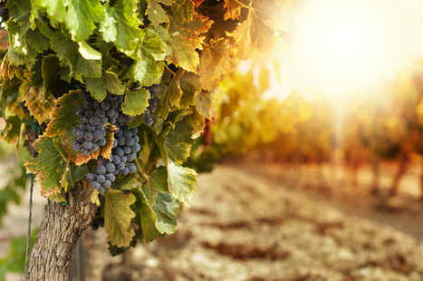 You Can Buy a 30% Stake in This Californian Winery With Bitcoins | Autour du vin | Scoop.it