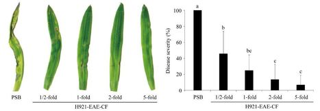 Culture Filtrates of Trichoderma Isolate H921 Inhibit Magnaporthe oryzae Spore Germination and Blast Lesion Formation in Rice | Rice Blast | Scoop.it