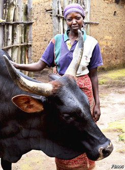 Beyond cows | Development economics | Scoop.it