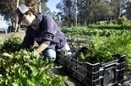 Win-win: Growing Grounds Farm provides therapy and job skills | News | Santa Maria Sun, CA | Vertical Farm - Food Factory | Scoop.it