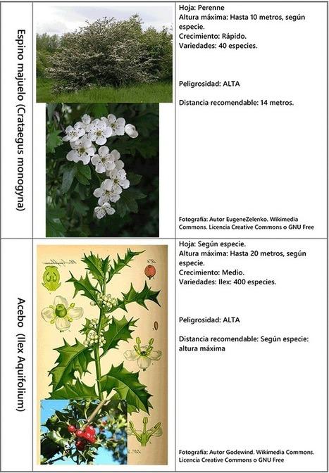 Afección de cimentaciones por árboles cercanos. Fichas 5 | Rehabilitación y Patología en Construcción | Scoop.it