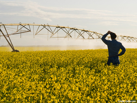 Farms drink too much - | GE Look Ahead | The Economist | Peer2Politics | Scoop.it