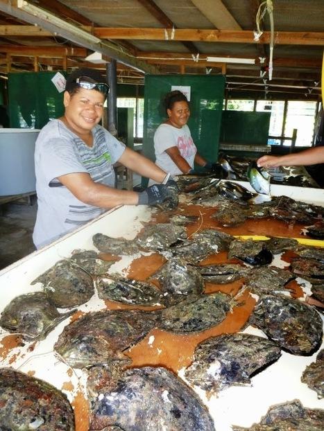 ACIAR: Oysters opening up opportunities for Fiji communities | Fiji EDP | Scoop.it