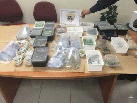 Costa Rica police seize 170 wild animals from German tourist's luggage | Animal Management | Scoop.it