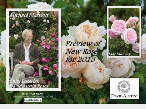 David Austin English Roses | This Week On Rose Chat Radio | Annie Haven | Haven Brand | Scoop.it