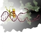 Researchers Take Early Step Towards Devising New Antibiotics - insciences | BBSRC News Coverage | Scoop.it