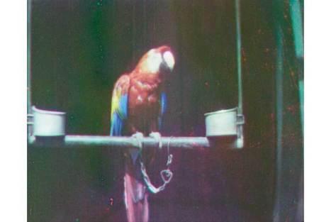 United Kingdom's National Media Museum revives first-ever film shot in color | Kiosque du monde : A la une | Scoop.it