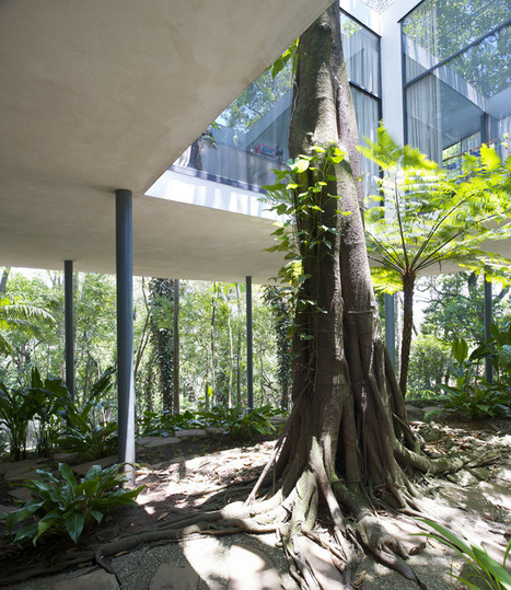 Living AROUND Trees: Glass Houses by Lina Bo Bardi and Lacaton & Vassal – SOCKS | The Architecture of the City | Scoop.it