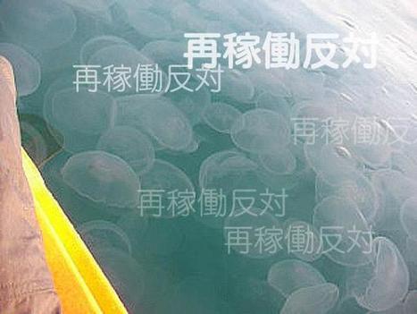 Occupy méduses : les méduses attaquent la centrale nucléaire d'Oi. | Tout est relatant | Scoop.it