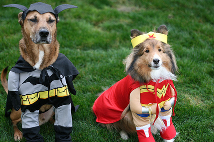 Halloween Pet Safety Measures | Pets World | Pets – Your Little Friends | Scoop.it