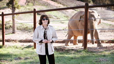 HBO: Documentaries | An Apology to Elephants | Home | Nature Animals humankind | Scoop.it