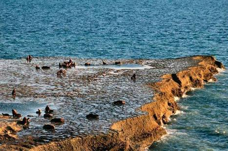 Seals in Puerto Pirámides, Patagonia Argentina | Travels | Scoop.it