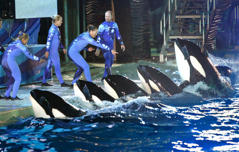 SeaWorld sees attendance climb after pushing back against critics | All about water, the oceans, environmental issues | Scoop.it