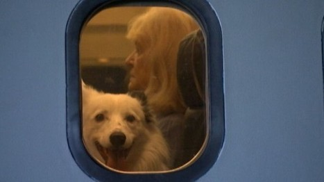 Aviation-Themed Film Studio Opens Fear of Flying School for Dogs   Strange days indeed...   Scoop.it