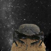 Anche gli scarabei seguono le stelle   Planets, Stars, rockets and Space   Scoop.it