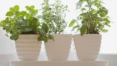 5 Tips for Starting Your Own Apartment Garden  Growing Herbs | Womens Special | Scoop.it