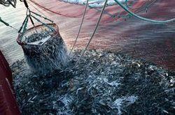 Pêche: une crise sous-estimée | Sécurité sanitaire des aliments | Scoop.it
