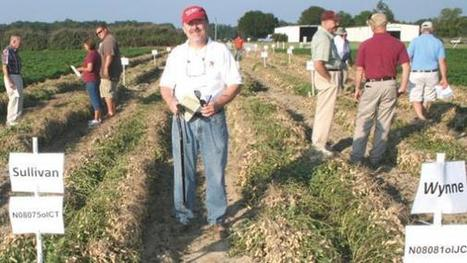 Growers should like two new high oleic peanut varieties | North Carolina Agriculture | Scoop.it