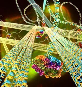 Scientists build 'smart' material made of DNA | KurzweilAI | Longevity science | Scoop.it