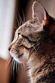 Bunny's Blog: How to Find a Cat-Friendly Vet   Pet News   Scoop.it