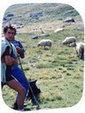 Dégâts d'ours dans les Pyrénées : relativisons ... ! | Planète, Nature et Biodiversité | Scoop.it