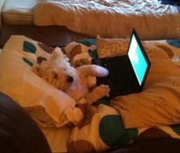 Sei blog e siti sui cani che forse non conosci | Dog Style | Scoop.it