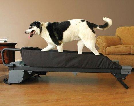 dog sports   Pet Care News   Scoop.it