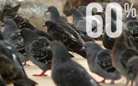 La fin des pigeons : Une loi de finances anti-start-up ? (suite et peut-être fin)  - Economie Matin | Le ras le bol des entrepreneurs Français d'être pris pour des pigeons | Scoop.it