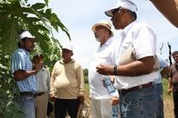 La historia de los decididos y la soberanía alimentaria en El Salvador | El Salvador | Scoop.it