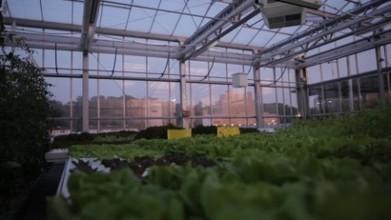 Urban Farmers - Rooftop Farms - CNN Video | Building better food futures | Scoop.it
