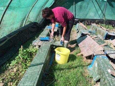 Dordogne : les escargots se ramassent à la pelle ! | Agriculture en Dordogne | Scoop.it