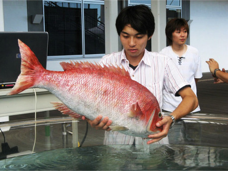 Tai-robot-kun : un robot poisson de 7Kg | Bots and Drones | Scoop.it