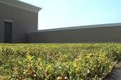 Living green roof at Strarion Financial in Fargo - WDAY | Vertical Farm - Food Factory | Scoop.it
